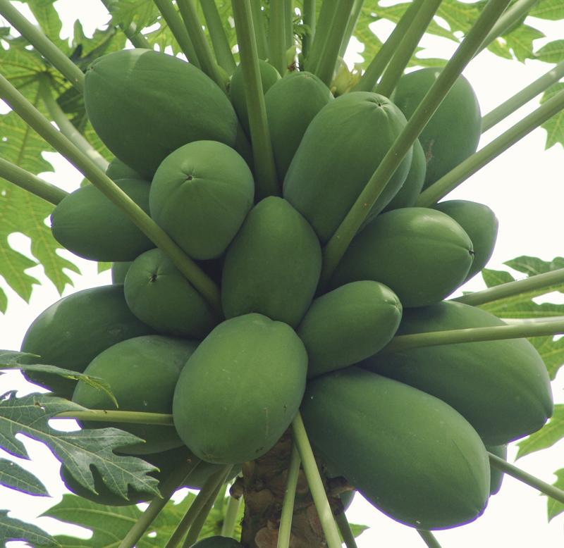 1fruitfarm1