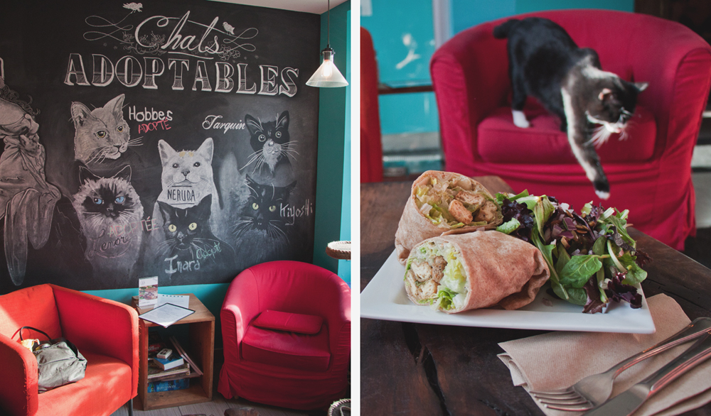 venosa cat cafe and adoption center, vegan restaurant in montreal, quebec, canada